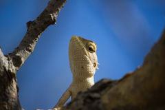 Un gecko Photo stock