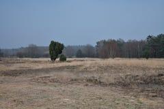 Un genévrier-arbre sur un nu amarrent pendant le crépuscule photographie stock