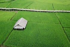 Un giacimento verde fertile del riso con il ponte di bambù fotografia stock libera da diritti