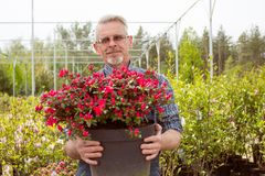 Un giardiniere che tiene un grande vaso con i fiori rossi fotografie stock