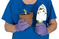 Strumenti di giardinaggio della tenuta del giardiniere, molla e concetto di piantatura Fotografia Stock Libera da Diritti