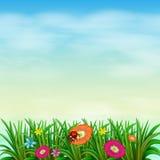 Un giardino con i fiori colourful illustrazione di stock