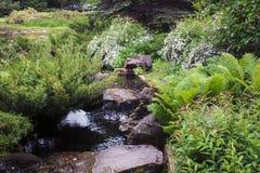 Un giardino con una corrente, cespugli con i fiori bianchi, felci ed abeti Fotografie Stock