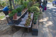 Un giardino dei fiori e degli agricoltori Immagini Stock Libere da Diritti