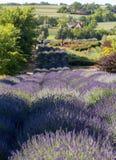 Un giardino del ` in pieno del ` della lavanda ha sistemato da Barbara e da Andrzej Olender nel ³ w di Ostrà 40 chilometri da Cra fotografia stock