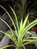 Un giardino delle piante floreali immagini stock libere da diritti