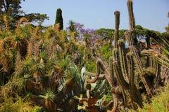 Un giardino delle piante tropicali Immagini Stock Libere da Diritti