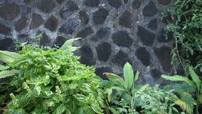 Un giardino di sistema integrato di acquacoltura e coltura idroponica nei tropici video d archivio