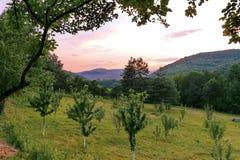 Un giardino verde con i giovani alberi da frutto piantati in un'area pittoresca con lontano i pendii di montagna coperti di denso Fotografia Stock Libera da Diritti