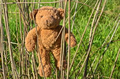 Un giocattolo perso Fotografia Stock