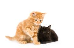 Un gioco dei due gattini Immagine Stock Libera da Diritti