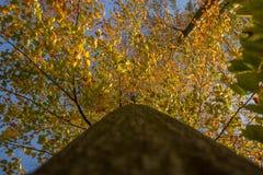 Un giorno di autunno nella foresta Fotografie Stock