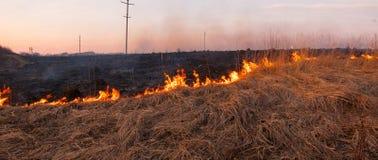 Un giorno di estate caldo, l'erba asciutta sta bruciando sul campo bruciarsi fotografie stock
