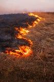 Un giorno di estate caldo, l'erba asciutta sta bruciando sul campo bruciarsi immagine stock libera da diritti