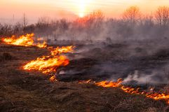 Un giorno di estate caldo, l'erba asciutta sta bruciando sul campo bruciarsi fotografia stock libera da diritti