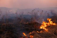 Un giorno di estate caldo, l'erba asciutta sta bruciando sul campo bruciarsi immagine stock