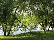 Un giorno di estate calmo sulla sponda del fiume immagine stock libera da diritti