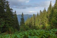 Un giorno di estate la vista dalla montagna Fotografia Stock Libera da Diritti