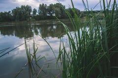 Un giorno di estate nella natura vicino allo stagno Fotografie Stock Libere da Diritti