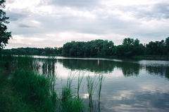 Un giorno di estate nella natura vicino allo stagno Fotografia Stock Libera da Diritti