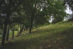 Un giorno di estate nella natura vicino allo stagno Immagine Stock Libera da Diritti