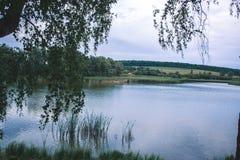 Un giorno di estate nella natura vicino allo stagno Fotografia Stock