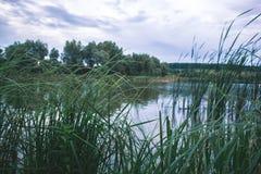 Un giorno di estate nella natura vicino allo stagno Fotografie Stock
