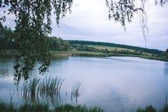 Un giorno di estate nella natura vicino allo stagno Immagine Stock