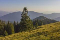 Un giorno di estate soleggiato, la vista dal plateau alla foresta e le montagne Cielo blu, lotti di erba verde ed alberi Fotografia Stock
