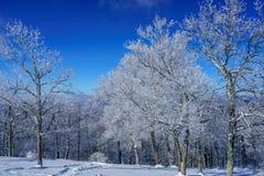 Un giorno di inverno freddo e croccante fotografia stock libera da diritti