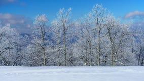 Un giorno di inverno freddo e croccante fotografie stock libere da diritti