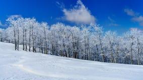 Un giorno di inverno freddo e croccante in cima al prato fotografia stock