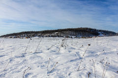 Un giorno di inverno nella regione di Leningrado Immagine Stock