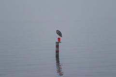 Un giorno nebbioso sul lago Immagini Stock