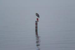 Un giorno nebbioso sul lago Fotografia Stock