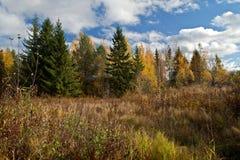 Un giorno nella foresta di autunno fotografia stock