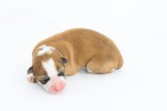 Un giorno per il cucciolo neonato Immagine Stock Libera da Diritti