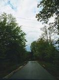 Un giorno piovoso nella foresta immagini stock libere da diritti