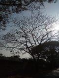 Un giorno soleggiato Fotografia Stock Libera da Diritti