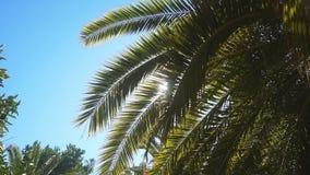 Un giorno soleggiato nel sud caldo I raggi del ` s del sole fanno il loro modo tramite le foglie della palma archivi video