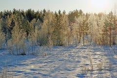 Un giorno soleggiato nella foresta di inverno Immagini Stock