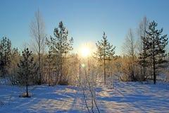 Un giorno soleggiato nella foresta di inverno Fotografia Stock