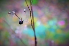 Un giorno sulla foresta Fotografia Stock