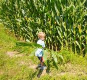 Un giovane agricoltore che ispeziona il suo raccolto ad un'azienda agricola in Ontario Fotografie Stock Libere da Diritti