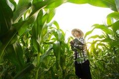 Un giovane agricoltore che sta nell'azienda agricola media del cereale che controlla fitopatologia del cereale Fotografie Stock