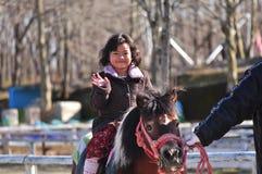 Un giovane cavaliere del cavallo Immagine Stock