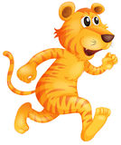 Un giovane funzionamento della tigre Immagine Stock Libera da Diritti