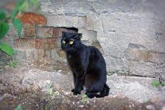 Un giovane gatto di colore nero Fotografia Stock Libera da Diritti