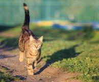 Un giovane gatto di soriano è funzionamento di divertimento e veloce sul prato verde nello spr Immagine Stock Libera da Diritti