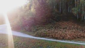 Un giovane impegnato negli sport in un bello parco di autunno Funzionare all'aperto Movimento lento Vista di Arial HD video d archivio